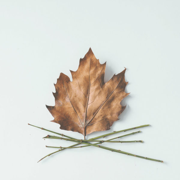An artful arrangement of a leaf and twigs